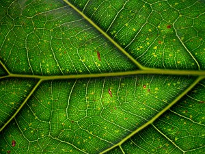 Experts Weigh In On The Positive Aspects Of Kratom