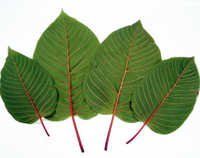 Is Kratom Good For Withdrawals
