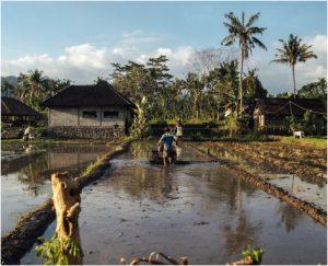 In Southeast Asia, Attitudes Toward Kratom Resemble Western Attitudes Toward Coffee